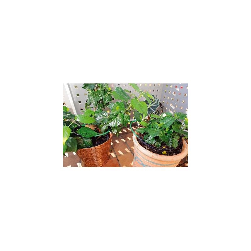 Kit complet pour arroser vos plantes de balcons et de terasses - Plantes pour balcons ...