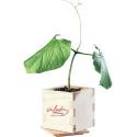 Beau coffret bois avec plante magique ''I Love You''